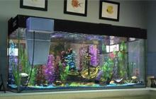鱼缸能改善家中风水,搬家时如何保护鱼缸?